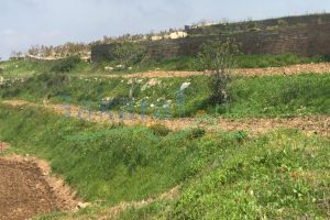 Lands For Sale Sour, Sour, South, Lebanon - 15748
