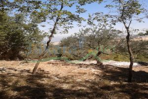 Lands For Sale Barhelyoun, Bcharre, North, Lebanon - 15006