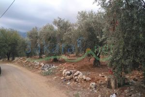 Lands For Sale Daraya, Zgharta, North, Lebanon - 14579
