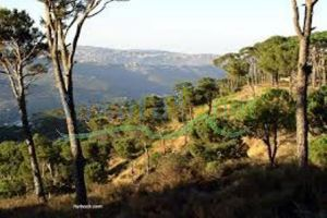 Lands For Sale Sawfar, Aley, Mount Lebanon, Lebanon - 8289