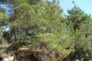 Lands For Sale Hrajel, keserwan, Mount Lebanon, Lebanon - 1121