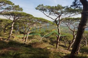 Lands For Sale Broumana, El Meten, Mount Lebanon, Lebanon - 15392