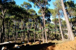 Lands For Sale Baabdat, El Meten, Mount Lebanon, Lebanon - 13676