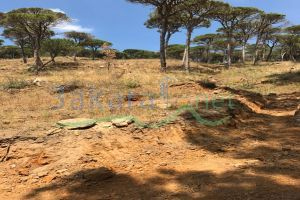 Lands For Sale Lebanon - 15295