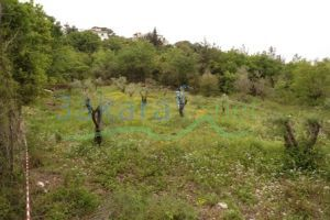 Lands For Sale Al Debiyeh, Ech Chouf, Mount Lebanon, Lebanon - 11324